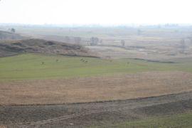 sarny w krajobrazie