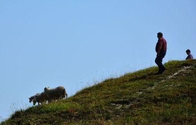 Panstwo Siepraccy i owieczki